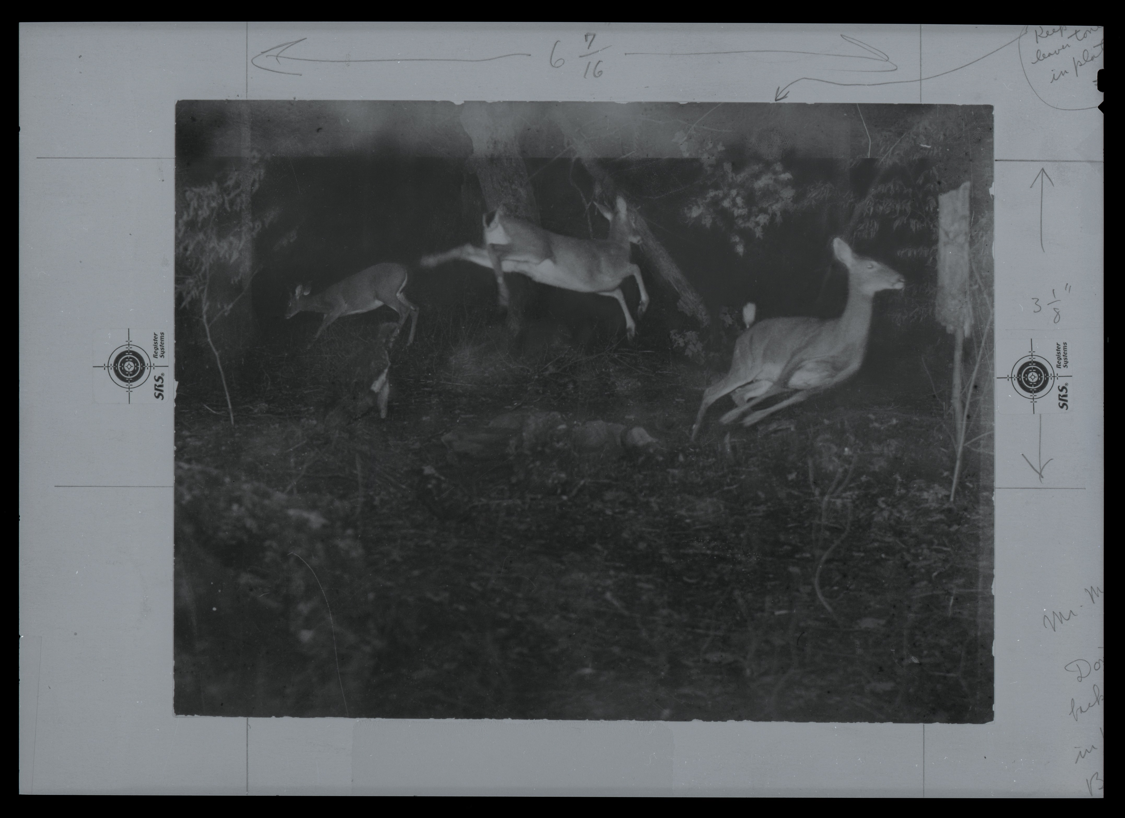 """Camera trap"" of three deer by George Shiras III"