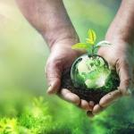Plant and globe (iStock image)